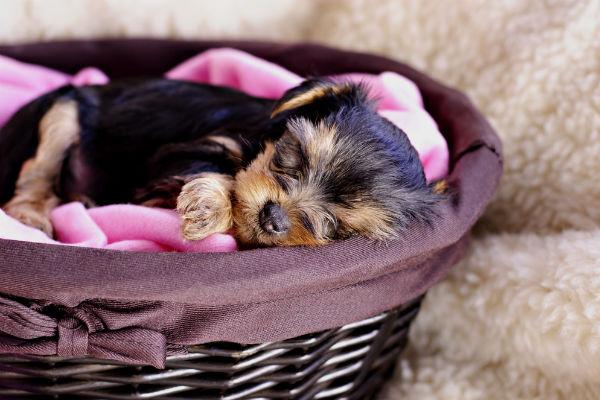 Dormirá como un bebé