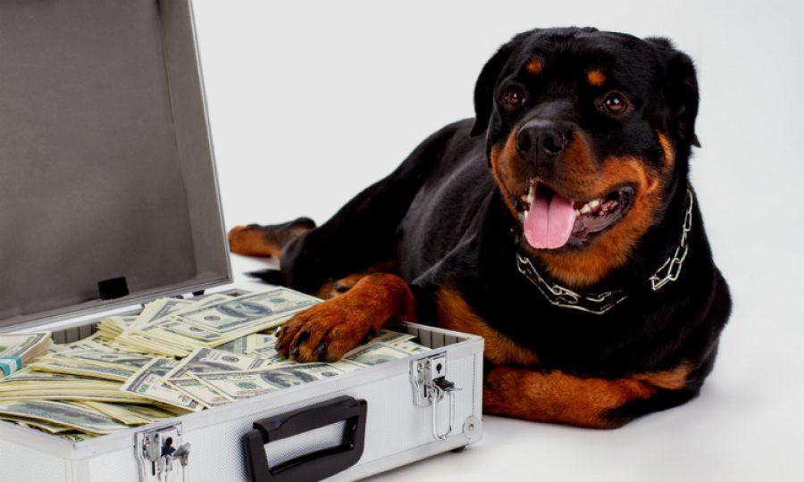 Mascotas millonarias, la tuya también podría ganar un gran premio