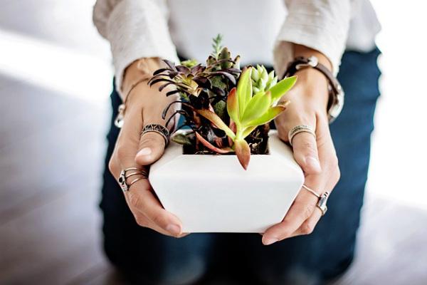 Estrena planta y cuídala todo el año