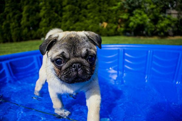 Terapia acuática, para los más pesaditos