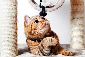 Tu gato se merece un buen gimnasio, ¡elige la mejor opción!