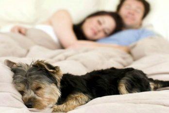 Razas de perros aptas para personas alérgicas, ¡son hermosos!