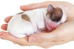 ¿Sabes cómo cuidar a un cachorro recién nacido? Ten en cuenta estos consejos
