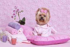 Tratamientos de belleza para tu perro y pueden ser gratis con este premio