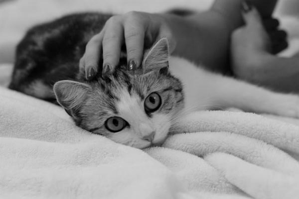 5 razones por las que tu gato es tu mejor amigo