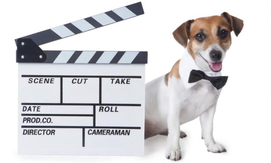 ¿Cómo lograr que tu mascota sea una estrella en redes sociales?