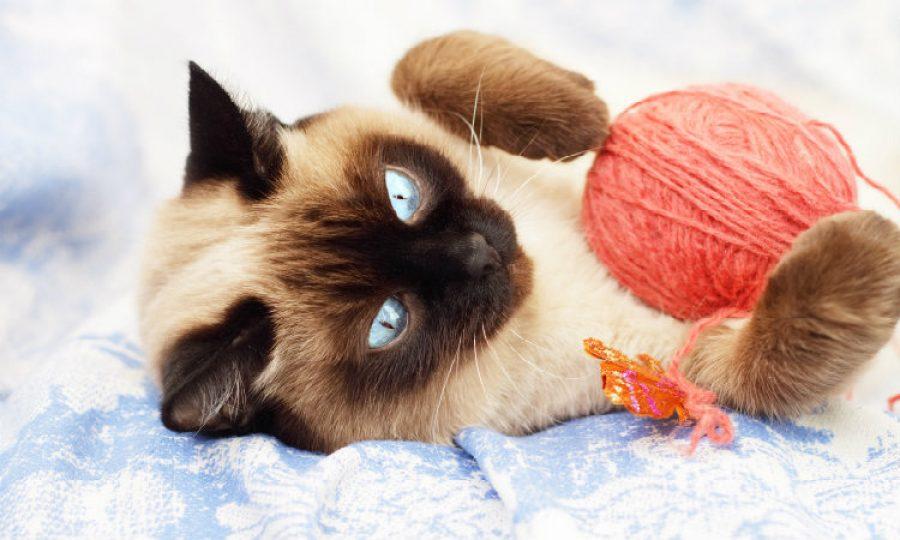 5 objetos irresistibles para todos los gatos