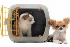 El cargador para tu mascota debe ofrecerle comodidad. Elige el mejor para ella