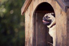 Son necesarias las casas para perros ¿Es momento de conseguir una?