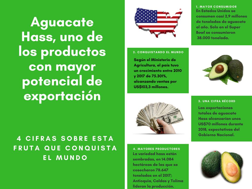 El aguacate Hass conquista los mercados de Europa, EE.UU., y Asia. ¡100% colombiano!