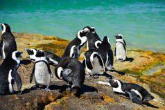 ¿Te gustaría ir al fin del mundo? La Patagonia un lugar ¡imperdible!