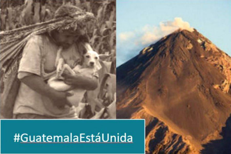 La historia del hombre que rescató de las cenizas a su mascota en Guatemala