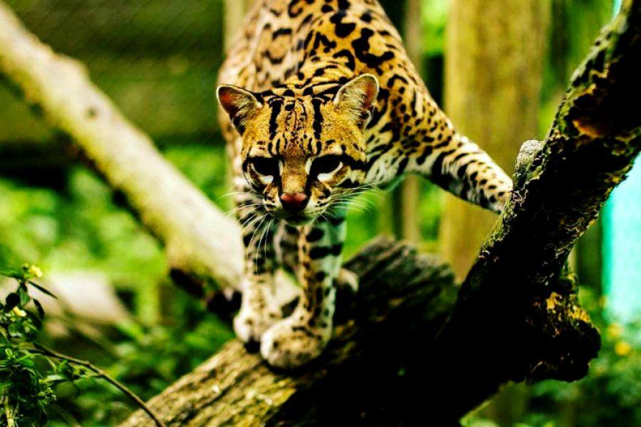El Parque Nacional Natural de Chiribiquete fue declarado Patrimonio de la Humanidad