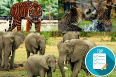 Existe el primer atlas mundial de mamíferos vivos y extintos por el hombre