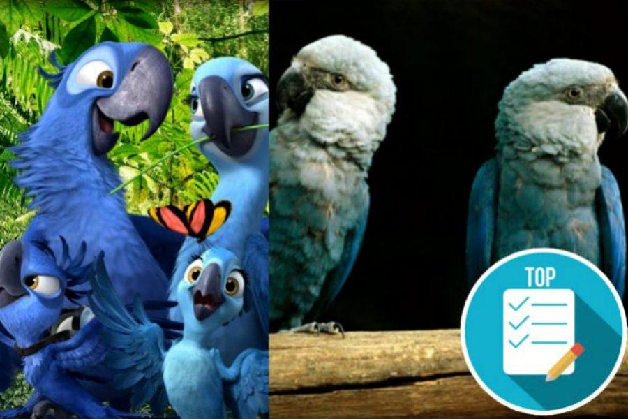 """Declaran extinto de su hábitat natural al guacamayo azul que inspiró la película """"Río"""". ¡Adiós Blu!"""