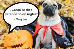 ¿Tu inglés da más miedo que los disfraces de Halloween? ¡Deja de aterrorizar a todos y aprende un nuevo idioma!