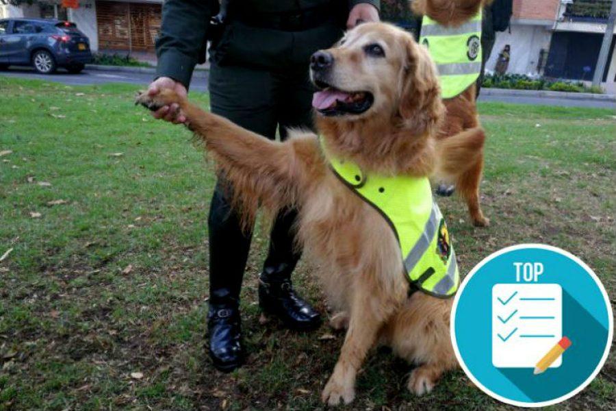 32 perros jubilados de la policía buscan un nuevo hogar. ¡Así puedes adoptar a uno de estos héroes!