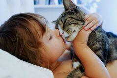 ¿Te consideras un #SoyPetLover enamorado de los gatos? ¡Este es el lugar para ti!
