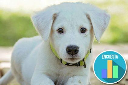 Inglaterra defiende a los animales y prohíbe la venta de perros y gatos cachorros