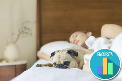 ¡Dormir con nuestra mascota es DELICIOSO y saludable! Este estudio confirma lo que siempre supimos