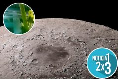 Esta es la razón por la que murió la semilla de algodón que germinó en la Luna