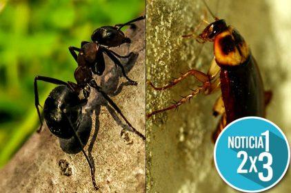 Abejas y hormigas están desapareciendo en todo el mundo y se multiplican las moscas y cucarachas