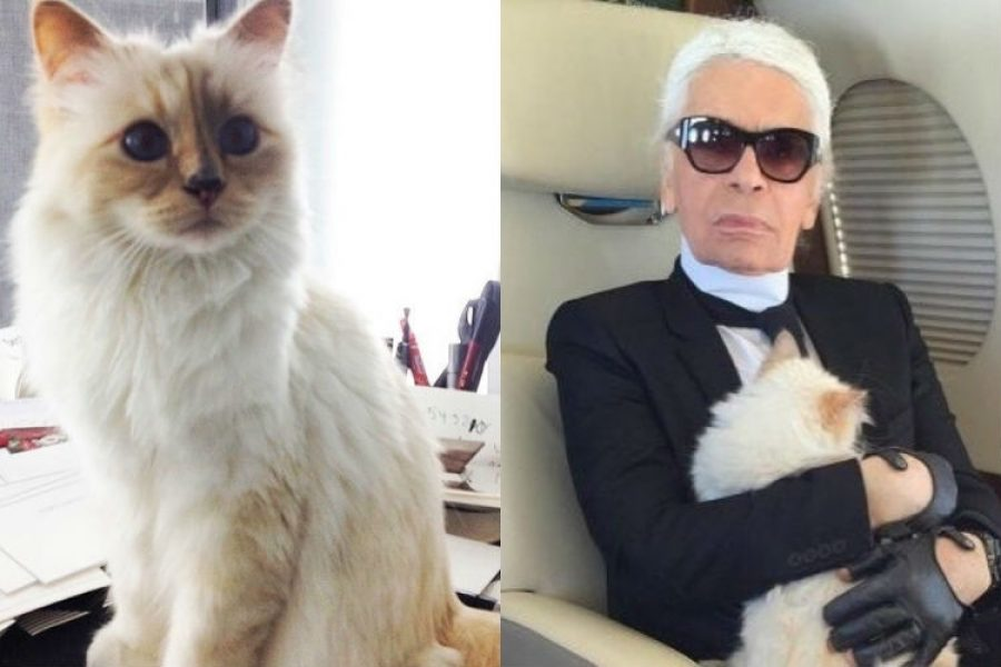 Choupette, la gatita que heredó varios millones de la fortuna del diseñador Karl Lagerfeld