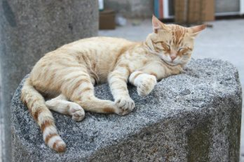 Estos gatos eligieron lugares muy particulares para dormir ¡Son los reyes del mundo!