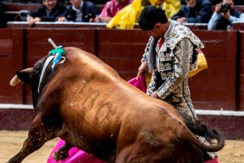 Las corridas de toros continuarán siendo legales en Colombia a pesar de la lucha de los animalistas