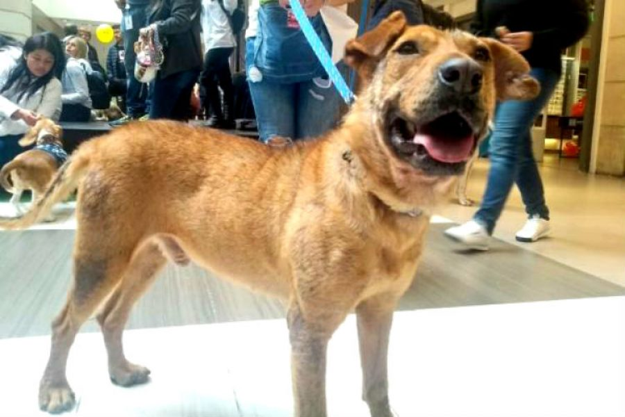 Serafín, el adorable perro que nadie ha querido adoptar y que podría ser tu nueva mascota