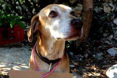 ¡ Un guuuuuau para Deko! Logró pagar sus quimioterapias vendiendo postres