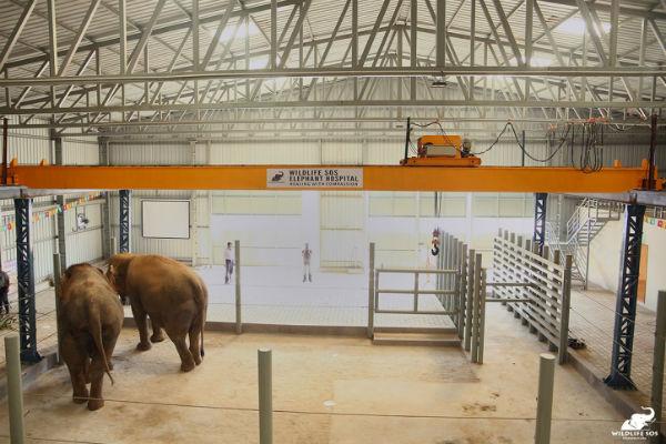 Interior-of-the-Wildlife-SOS-Elephant-Hospital