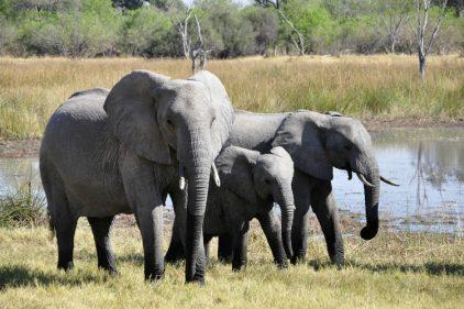Los elefanticos tienen su propio hospital ¡Nos llena de ternura y esperanza esta noticia! 🐘🐘