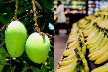 El cáncer de colon se puede prevenir con plátanos verdes y mangos