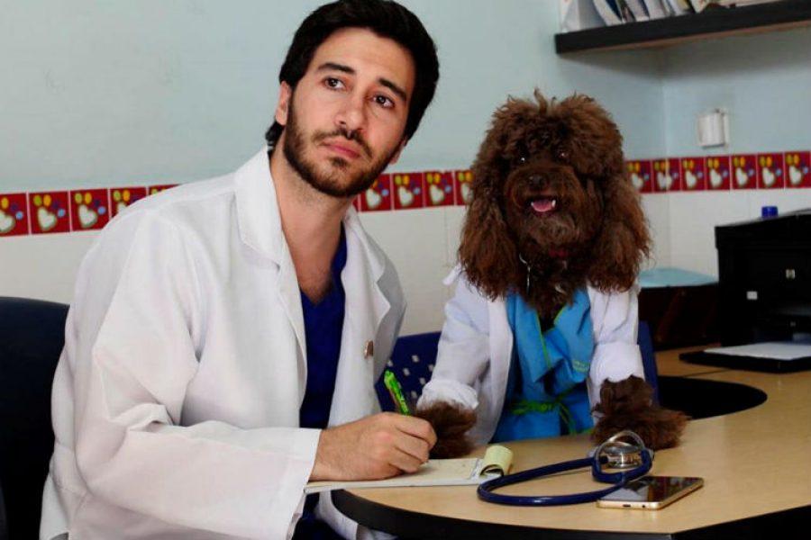 Los perros enfermeros que facilitan la recuperación de los niños en Colombia