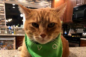 ¡Hey, hola! dice este gato que tiene acento sureño y enloquece a quien lo escucha