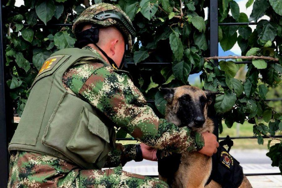 ¡Un valiente acto de amor! soldado da la vida para salvar a su mascota