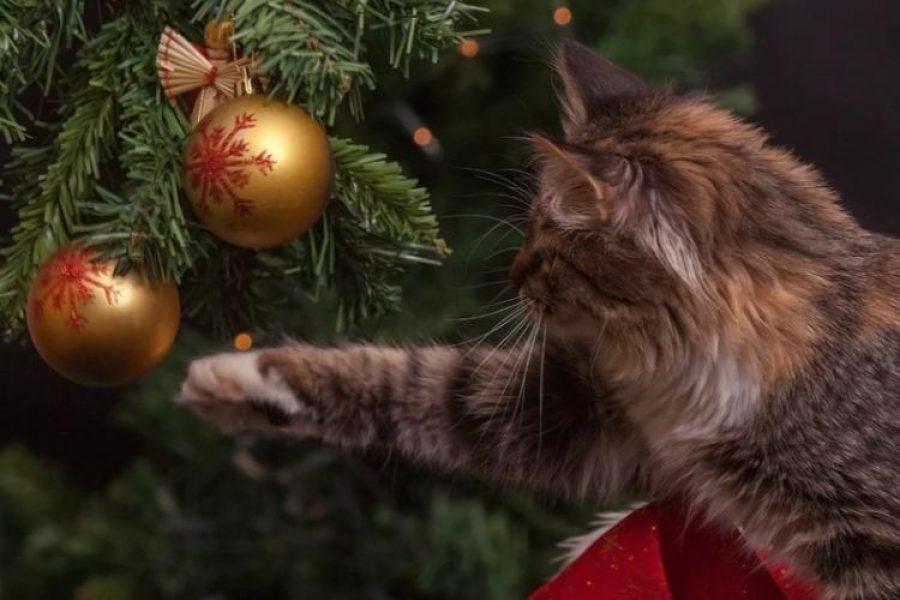 La razón por la que los gatos atacan a los árboles de Navidad y cómo evitarlo
