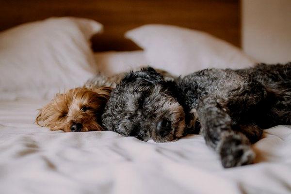 Perros cama