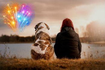 Crean fuegos artificiales sin ruido para cuidar a las mascotas, ¡un país a la vanguardia!
