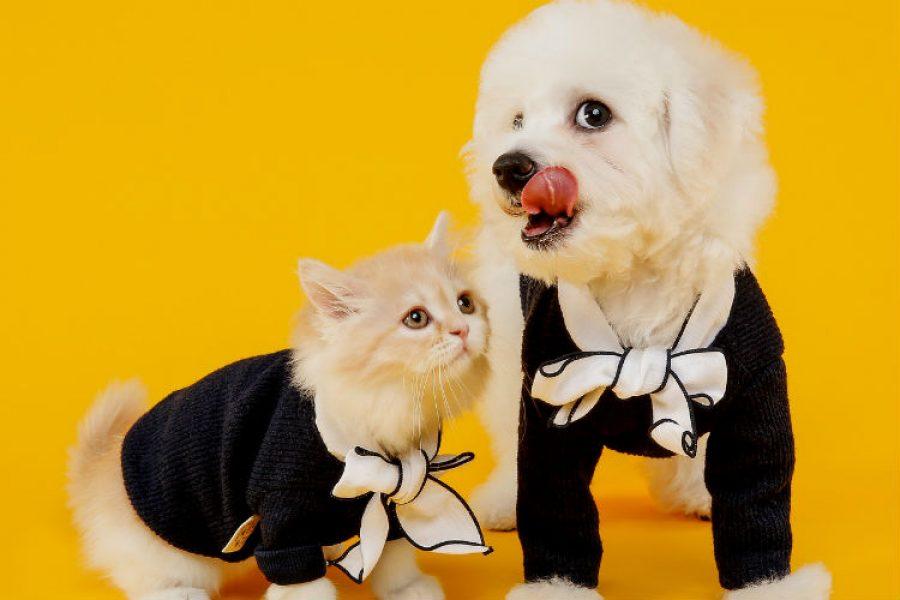 Gran jornada de adopción de perros y gatos víctimas de accidentes y maltrato