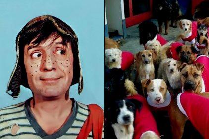 Así fue la piñata para perros al estilo de 'El chavo del ocho'