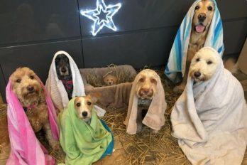 Pesebre canino: el hermoso grupo de perritos que posaron para Navidad