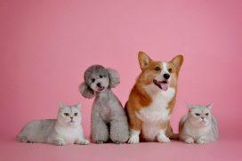 La emisión que tranquilizará a tus mascotas el 24 y 31 de diciembre, ¡no a la pólvora!