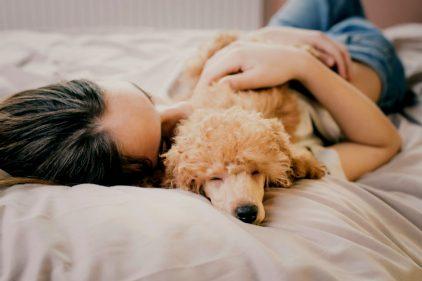 Familia construye una cama de 4 metros para dormir con sus 7 perros, ¡inseparables!