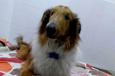 Perro murió después de salvar a su familia de un enjambre de abejas