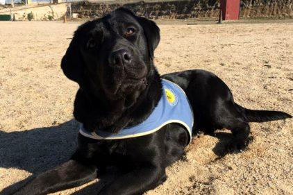 Roban perra que había sido entrenada para ayudar a niña con una minusvalía física