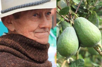 La feijoa se convierte en el 'oro verde' de los campesinos colombianos
