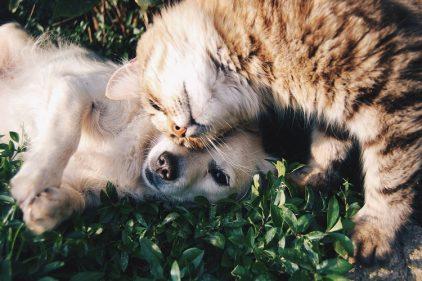 Este país busca establecer penas de 18 años de cárcel para quienes maltraten a los animales