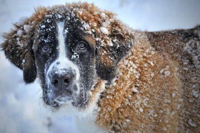 Dejar a las mascotas en el frío ahora será castigado por ley, ¡una buena noticia!